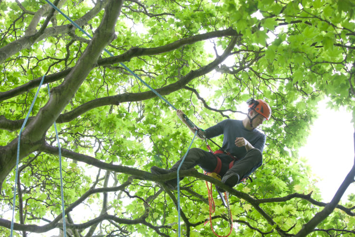 Arboriculture at Kirkley Hall