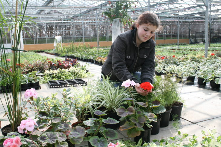 Horticulture at Kirkley Hall
