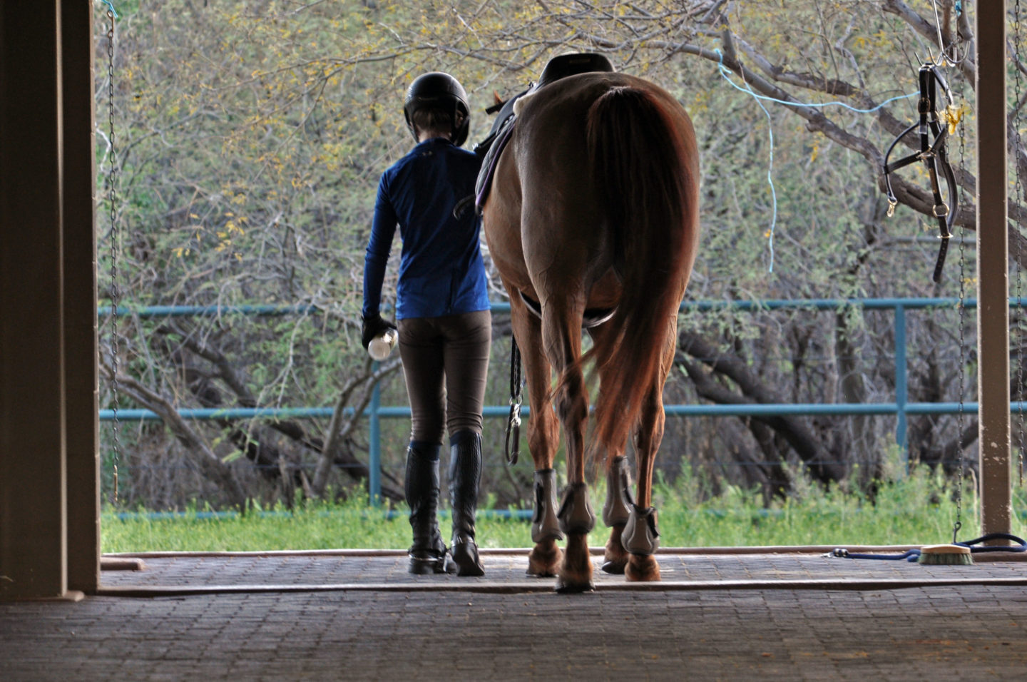 Level 2 Technical Certificate In Equine Care National